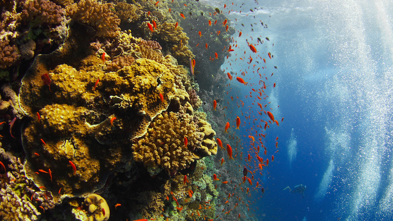 diving-the-red-sea-4