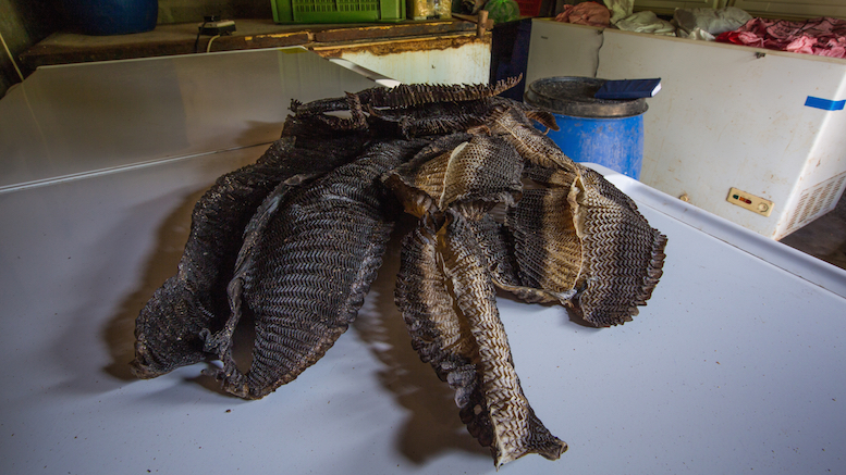 manta-ray-conservation-sri-lanka-3