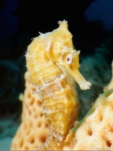 Dave's first ever seahorse encounter, 1998