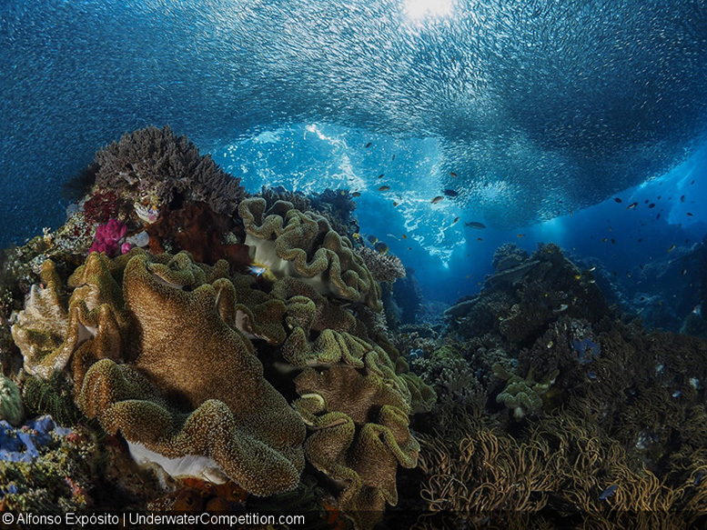 DEEP Indonesia 2016 – Reefscapes Category Gold by Alfonso Expósito
