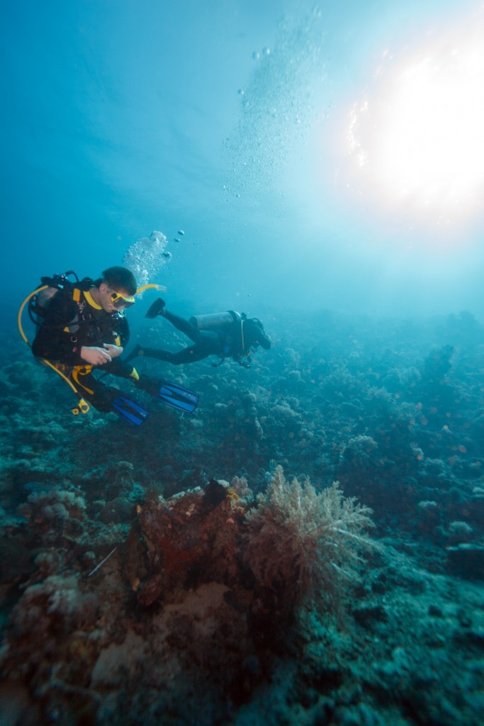 Two divers linger by the sea bottom, searching for marine life