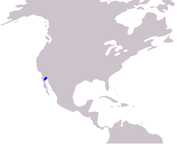 Vaquita porpoises are endemic to this small area highlighted blue. © Wikimedia Commons