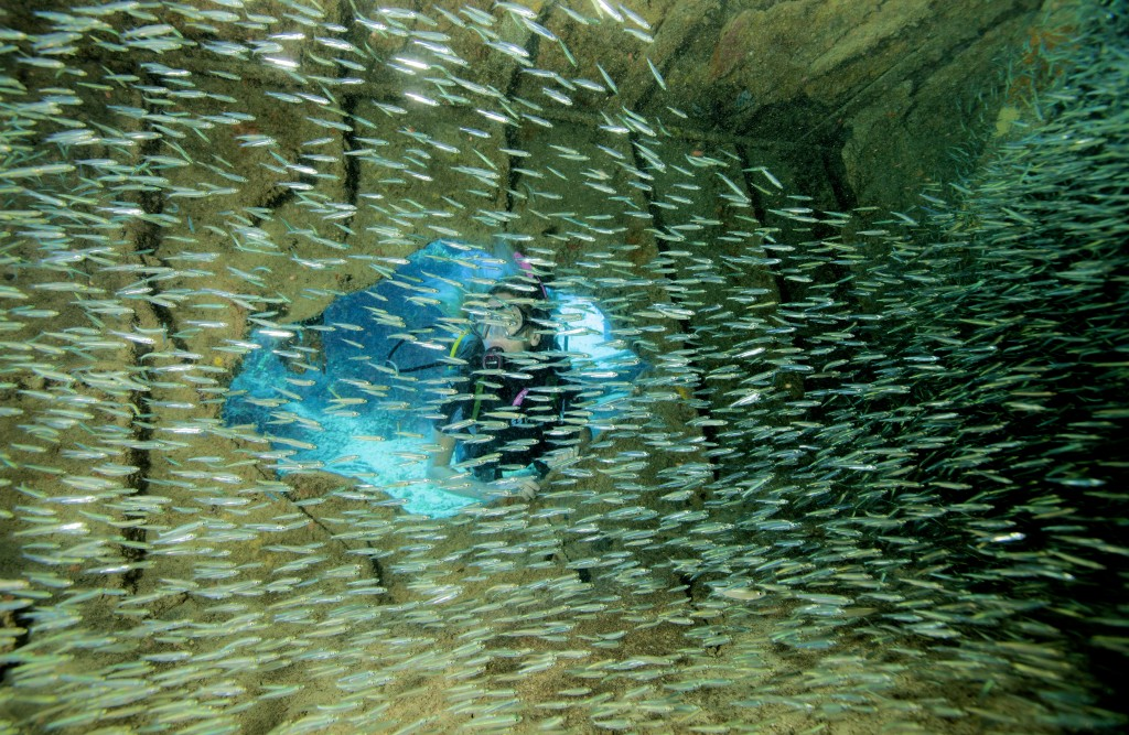 "Silversides and other reef residents haunt the famous ""Tears of Allah"", setting of Bond's unexpected encounter with a tiger shark. © Stephen Frink"
