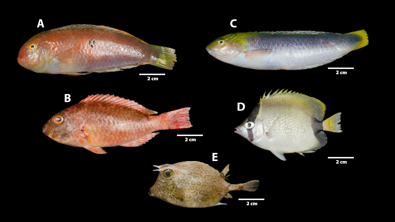 Prancha Corais Foz Amz Sci Adv Format_Fish Landscape