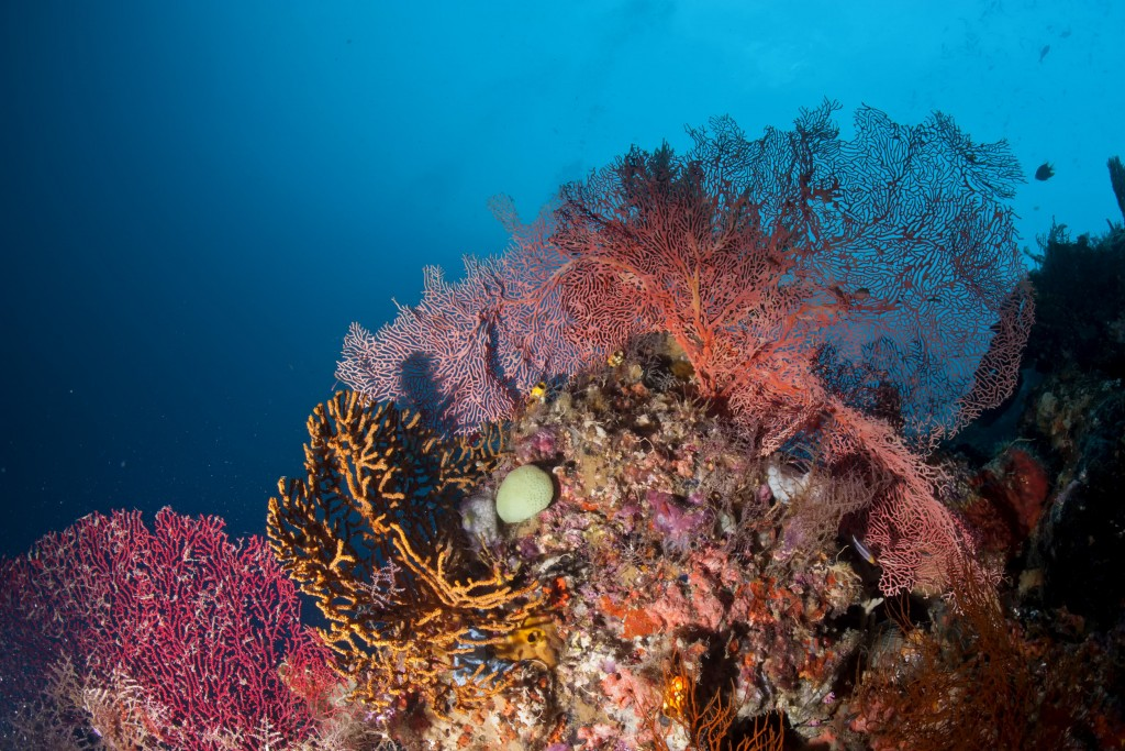 The colourful underwater realms of Papua New Guinea © Andrea Izzoti