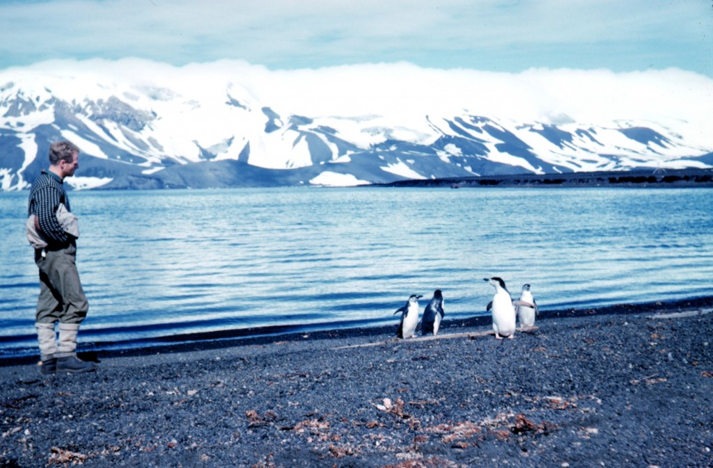 Penguins on deception island (1962) © NOAA/ Wikimedia Commons