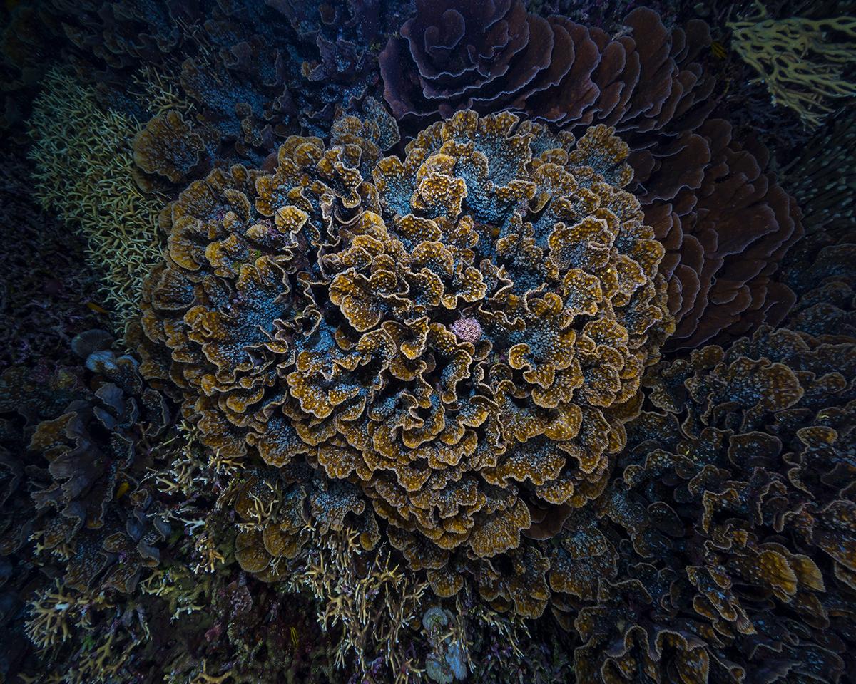 Bilikiki Solomon Islands scuba dive underwater South Pacific