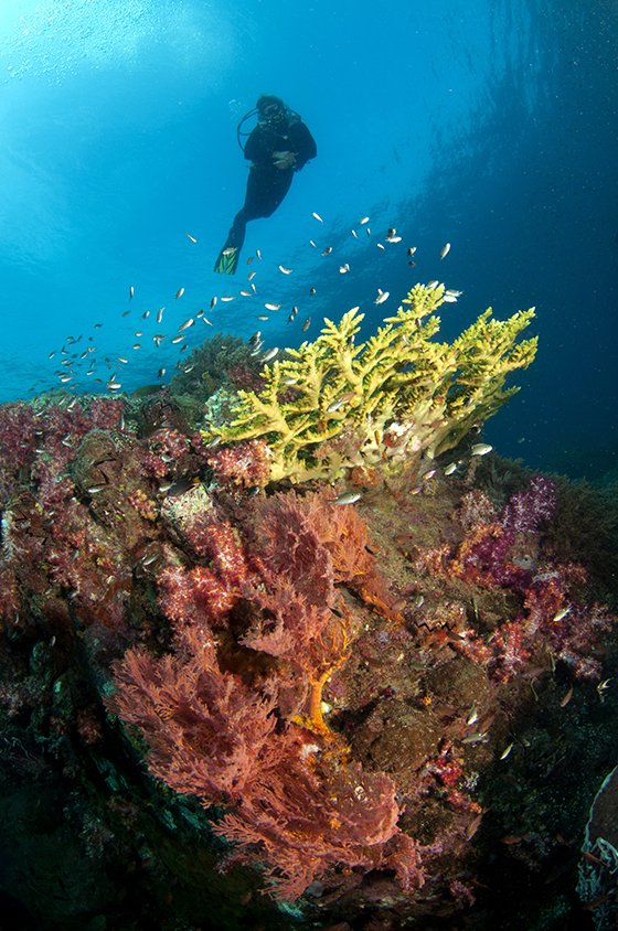 Profusions of hard and soft corals are common in the water's around Redang, Malaysia © A.B. Lee