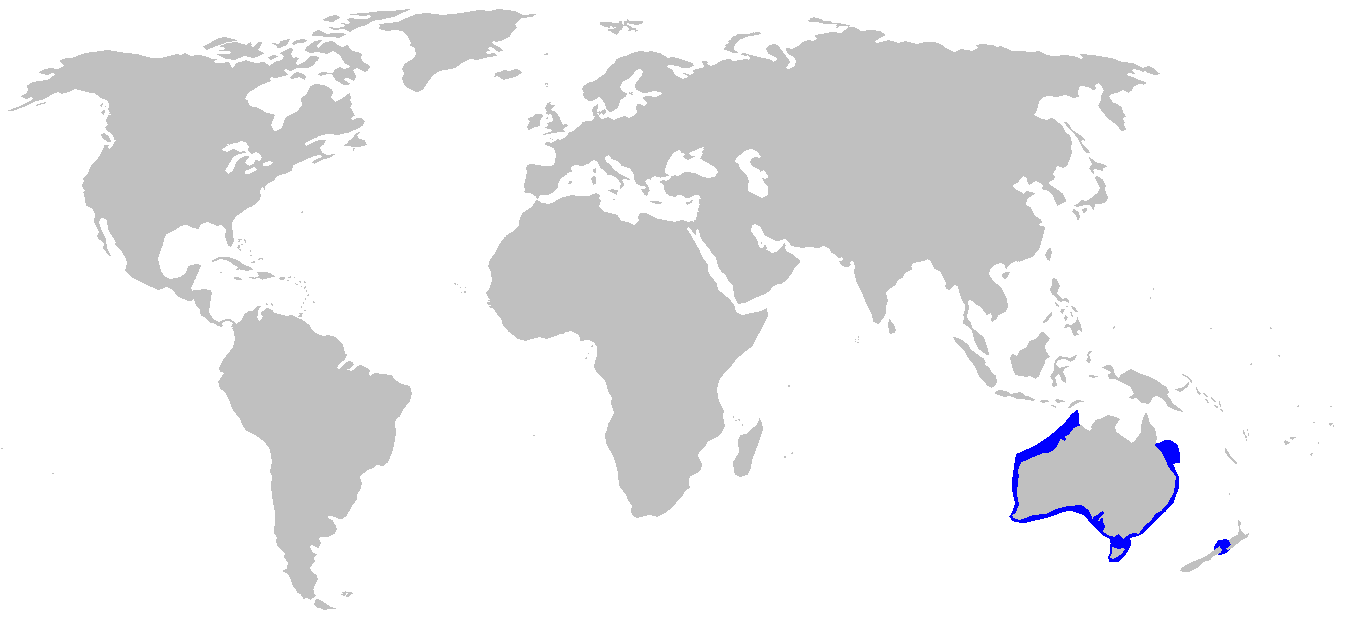 Distribution map of Port Jackson shark, highlighted in blue