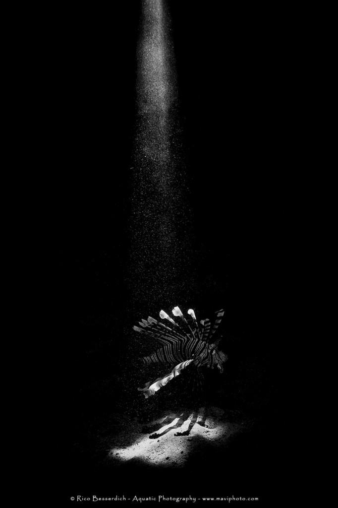 """It was in 2010 that Rico got his breakthrough – conducting a fine art underwater photography exhibition that got him recognised in the photography world."" © Rico Besserdich"