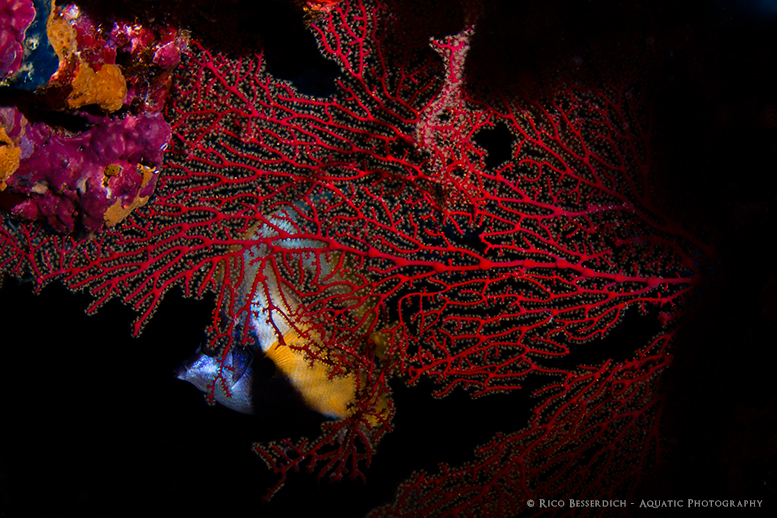 """Gathering this information will help you to choose the right configuration of your underwater photography equipment, such as the kind of lens, strobes, strobe-arms etc."" © Rico Besserdich"
