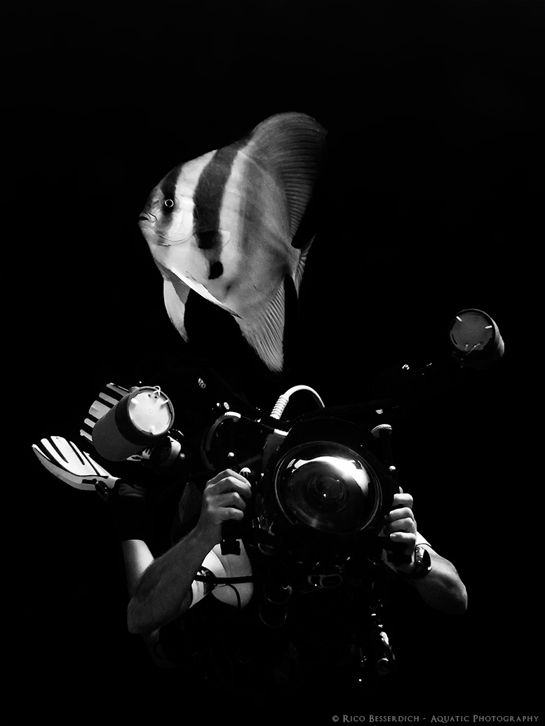 """""""Keen underwater photography shooters always think of their photo equipment first and of themselves second"""" © Rico Besserdich"""