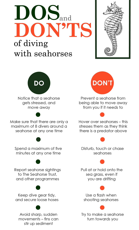 seahorsesinfographic