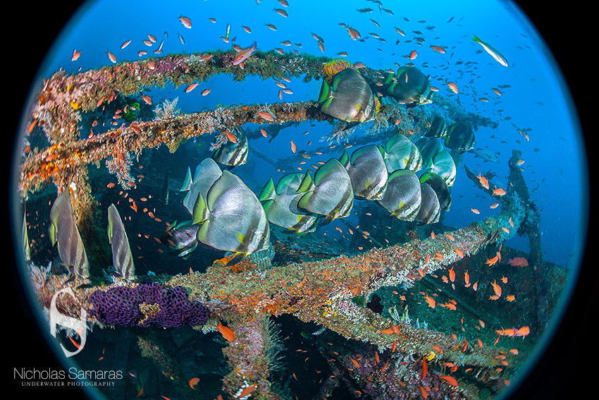 """Top in my bucket list [to dive next] is Papua New Guinea and the Galápagos Islands. Those places have charmed me from my childhood..."" © Nicholas Samaras"