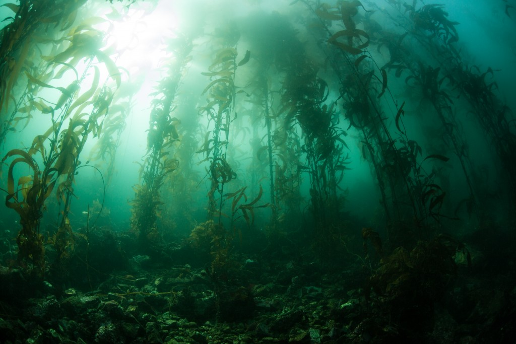Looking through the underwater jungle © Shutterstock