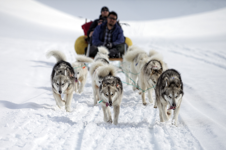 Sledge dogs towing a sledge with people sitting on the sledge in the blurred background, near Tasiilaq, East-Greenland, Atlantic Ocean, Arctic. © Tobias Friedrich