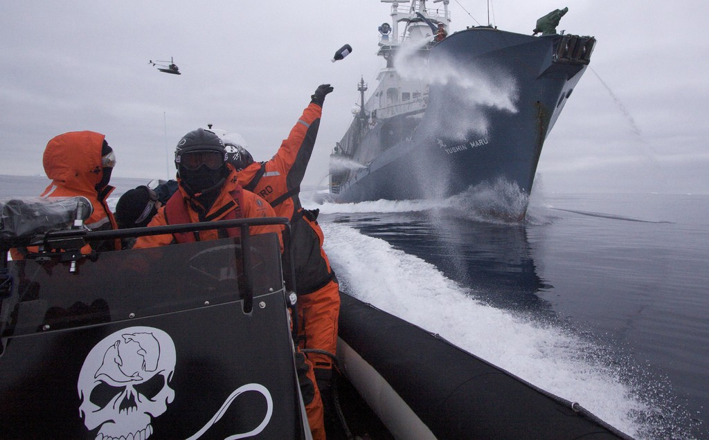 Sea Shepherd crew member Laurens De Groot hurls a bottle of butyric acid (rotten butter) at Japanese harpoon whaling ship, the Yushin Maru No. 1, as the Sea Shepherd helicopter flies overhead. The Yushin used water cannons to keep Sea Shepherd boats at bay in New Zealand territorial waters north of the Ross Sea off Antarctica in 2009. © Flickr.com