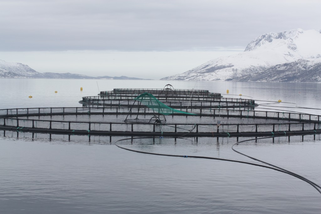fish_cages