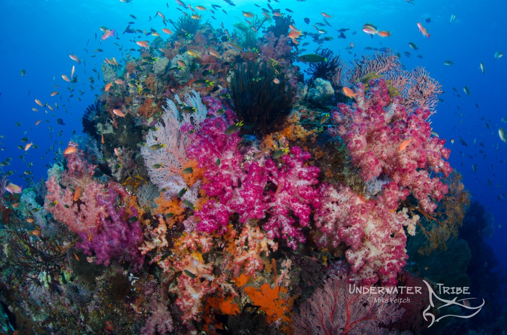 Soft Coral Covered Reef