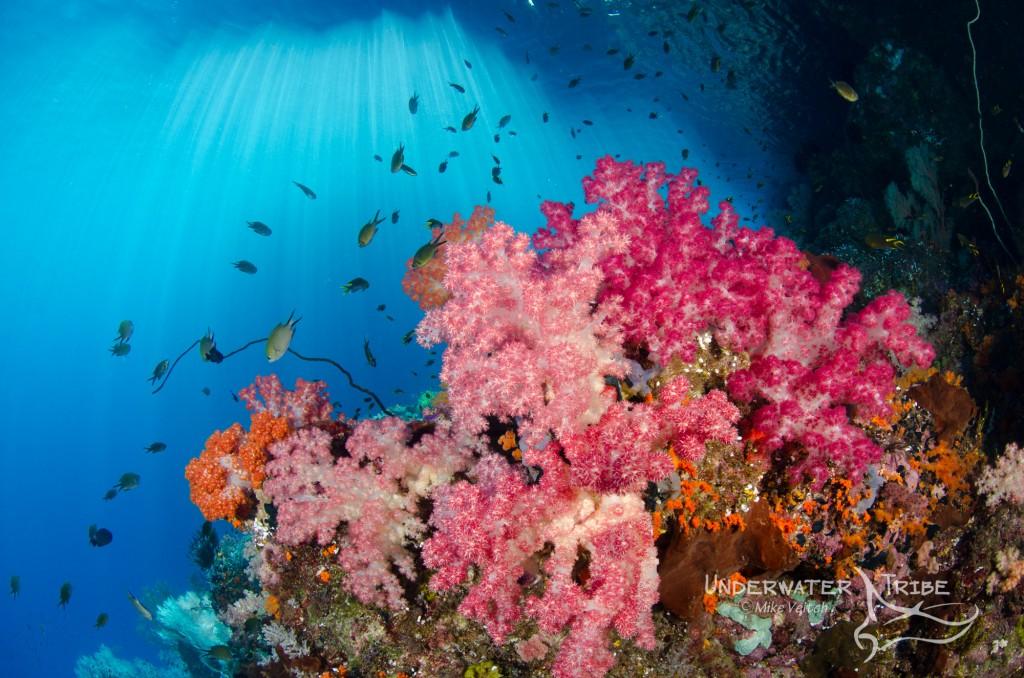 Soft Corals Under Island