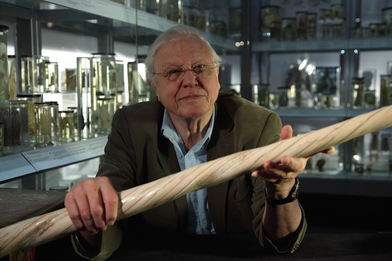 "David holding a narwhal tusk. ""We've lost several ice shelves from the poles; the evidence is there for all to see. And there is definitely more extreme weather about."""